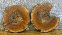 2- White Oak Live Edge Round Cut Rustic Centerpiece Wood Slabs 6520