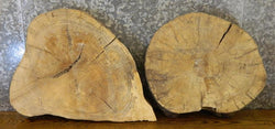 2- Live Edge Rustic Round Cut Hackberry End Table Top Wood Slabs 6534-6535