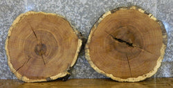2- Rustic White Oak Live Edge Round Cut End/Side Table Top Slabs 6562-6563