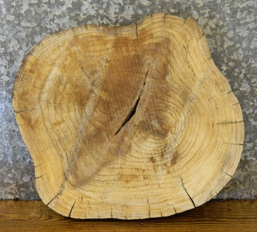 Reclaimed Round Cut Live Edge Hackberry Wood Log Slice 6578