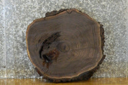 Live Edge Bark Black Walnut Round Cut End Table Top Slab 6611