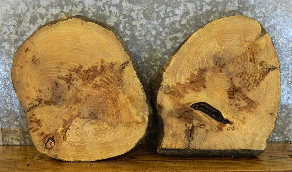 2- Partial Live Edge Round Cut Ash End Table Top Wood Slabs 6864-6865