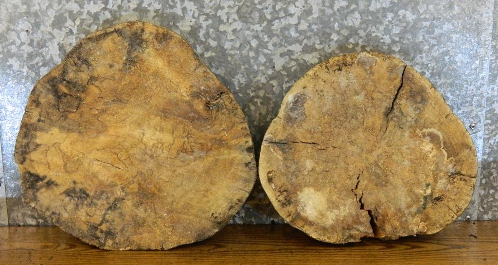 2- Spalted Maple Live Edge Round Cut Wall Art Slabs 6868-6869