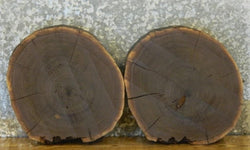 2- Salvaged Black Walnut Live Edge Round Cut Centerpiece Wood Slabs 6899-6900