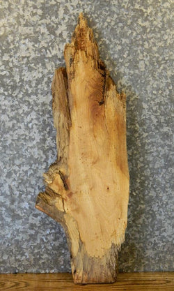 Rustic Partial Natural Edge Spalted Maple Taxidermy Base Wood Slab 768