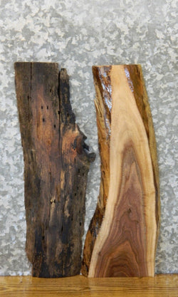 2- Rustic Live Edge Black Walnut Craft Pack/Taxidermy Base Slabs 7905-7906