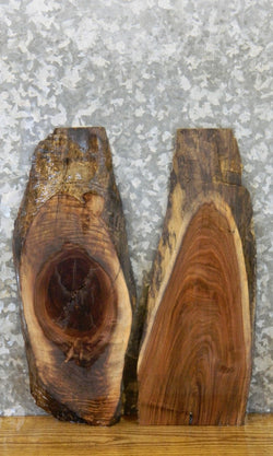 2- Rustic Black Walnut Live Edge Craft Pack/Taxidermy Bases 7954-7955