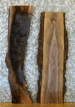 2- Natural Edge Black Walnut Rustic Craft Pack/Taxidermy Base Slabs 8405-8406