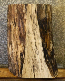 Kiln Dried Spalted Maple Natural Edge Pedastal Base/Small Log 8552