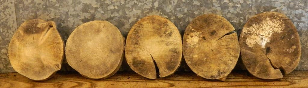 10- Round Cut Natural Edge Maple Centerpiece/Room Decor Wood Slabs 9947