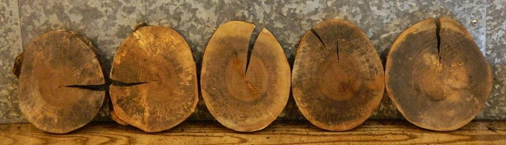 10- Natural Edge Round Cut Maple Craft Pack/Room Decor Wood Slabs 9948
