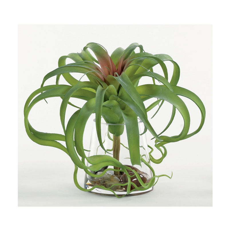 Single Giant Tillandsia in Water