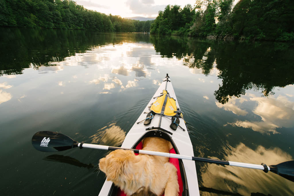 Taking your dog kayaking
