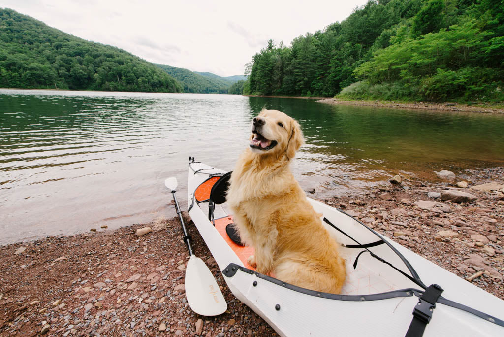 Training your dog to kayak
