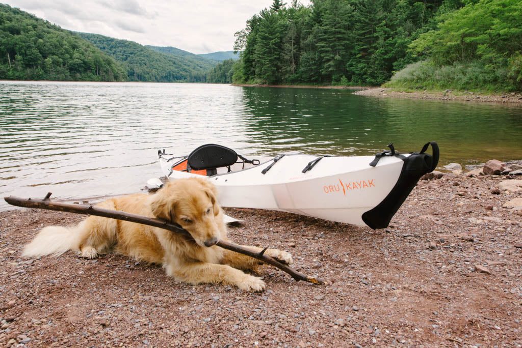 How to train your dog to kayak