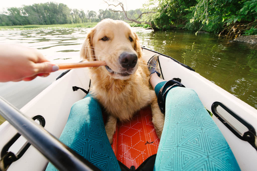 Kayak training for dogs
