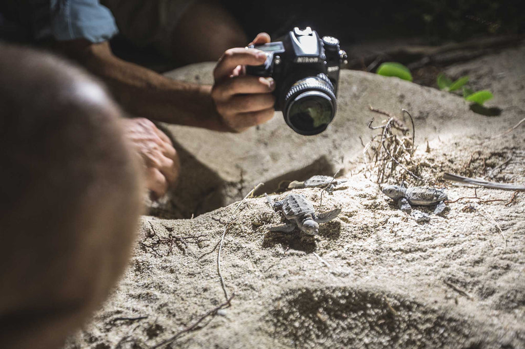 Capturing turtles birth
