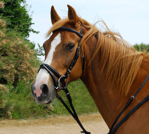 Windsor Leather Bridle With Flash Noseband - 4Pony.com