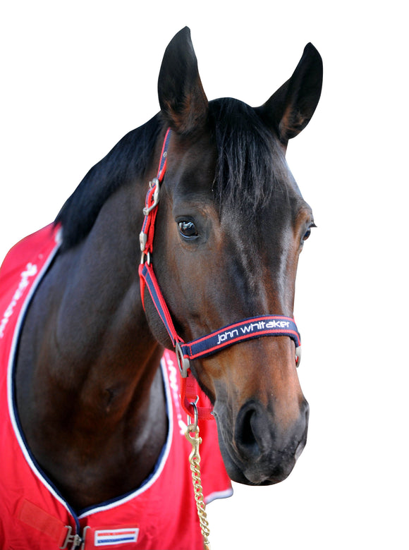 Whitaker Headcollar Padded Fleece Red/Navy - 4Pony.com