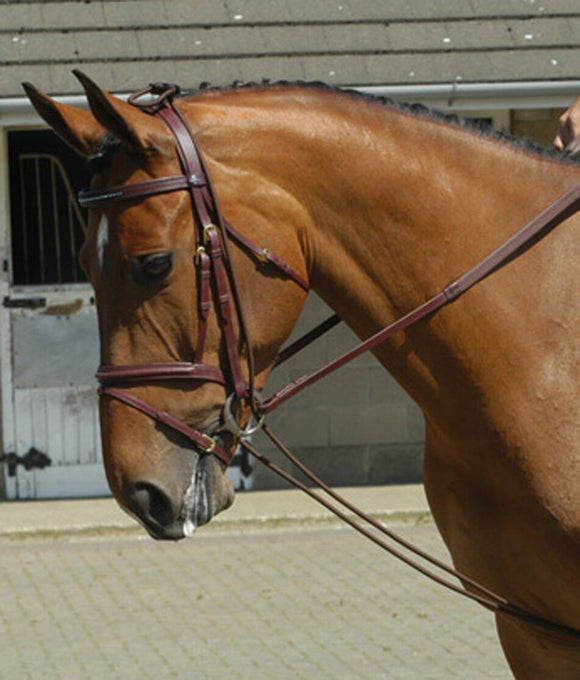 Whitaker Training Rein - 4Pony.com