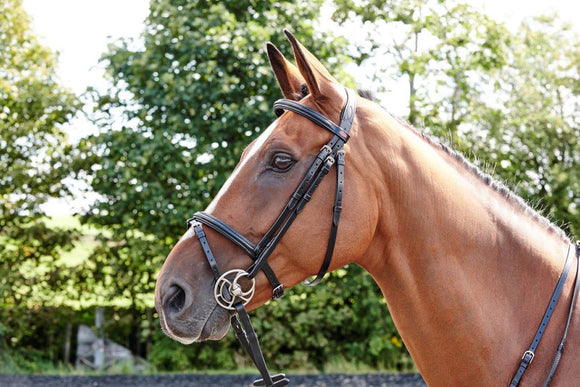Whitaker Flash Bridle Barton