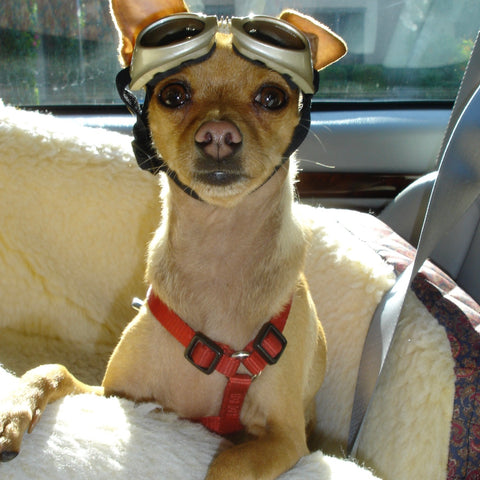 Angelo in carseat with Doggles