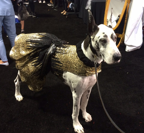 gold and black dress for Great Dane for Le Chien 2016