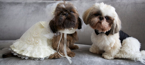 Bride and Groom Shih Tsu outfits by Spoiled Dog Designs