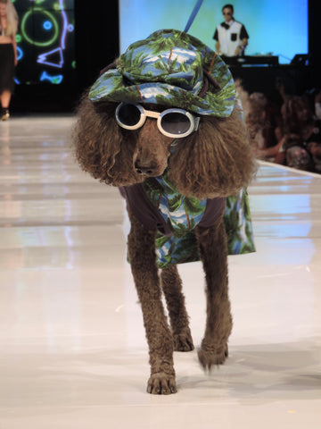 on the runway at Le Chien 2016