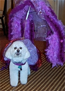 dog in her outfit for the Fabulous Feather and Fur Follies