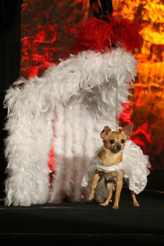 Bella in her costume for the Fabulous Feather and Fur Follies