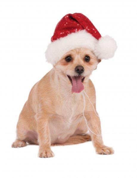 Red Sequin Santa Hat For Dogs and Cats