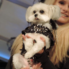 Black Silver Copper Sequin Tuxedo Dog Harness Jacket