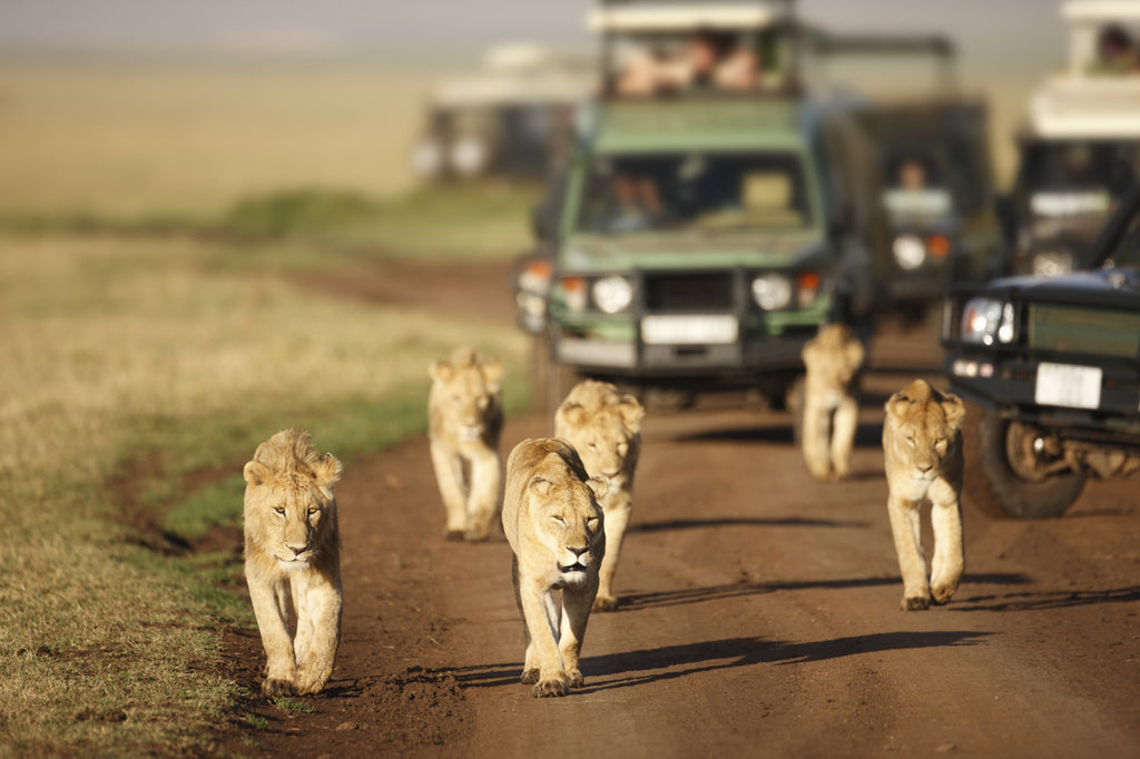 Best time to see animals while on safari