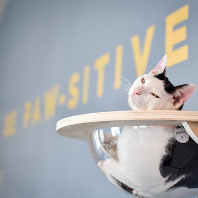 How Does a Cat Cafe Work? - Cat Therapy