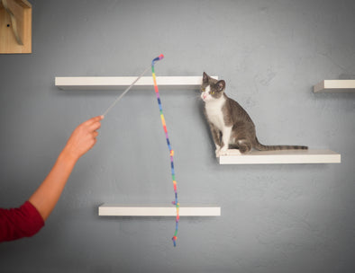 Tips: Making Your Home More Functional For Your Cat