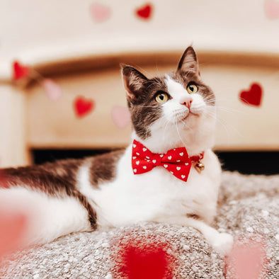 Valentine's Day Cat Lover's Gift Guide