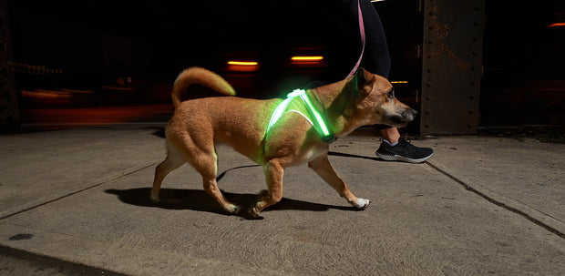 Light Hound