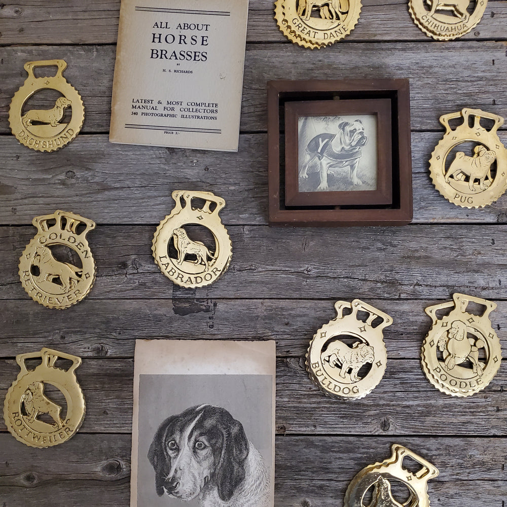 Bulldog Horse Brass (SOLD OUT)