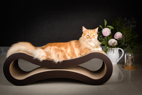 D&C Infinity Cat Scratcher and Lounge - Deluxe Cat Scratcher ON SALE