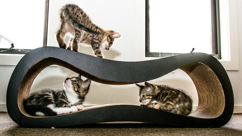 Walk Thru2+ Ziggi Cat Scratcher & Lounge