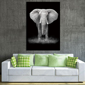 Elephant on Black - African Photographic Print