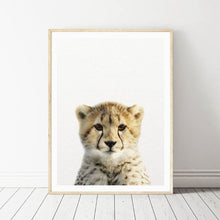 Load image into Gallery viewer, African Baby Animal Photographic Posters