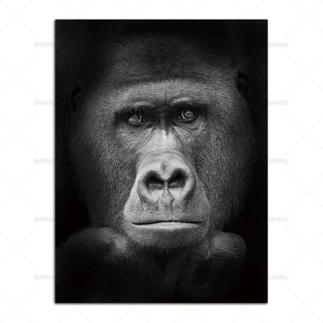 Sublime Gorilla on Black African Photographic Print