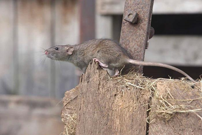 What is a humane mouse trap, and why does it matter?