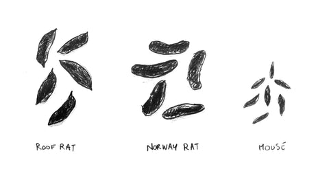 Rat and Mouse Droppings Compared