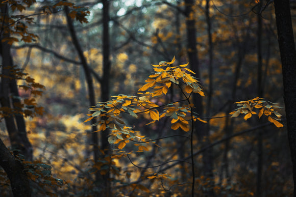 Brown leaves in a forest - suicide prevention workshop