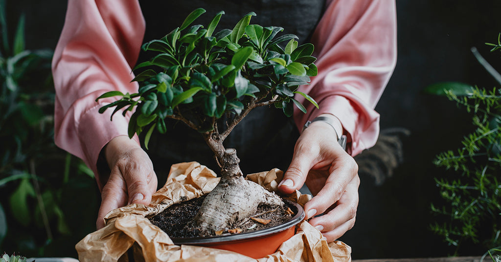 Caring For Your Bonsai
