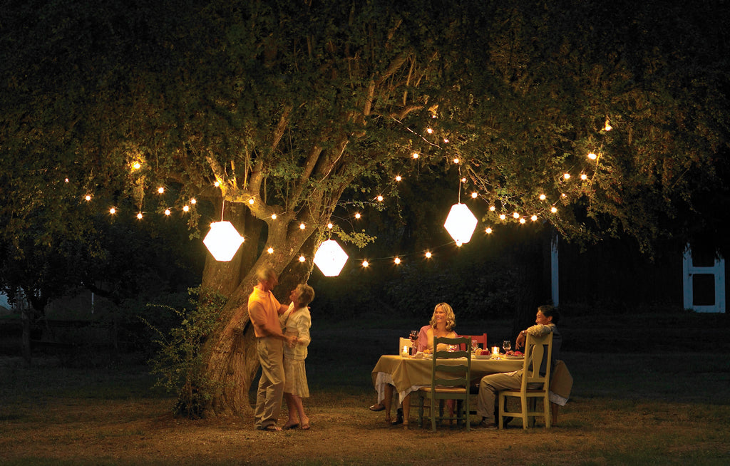 Table, Atmosphere, Plant, People in nature, Chair, Flash photography, Branch, Lighting, Mammal, Tree
