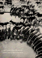 1940 Art Horse Watering Hole Original Print Photo - TnTCollectibles